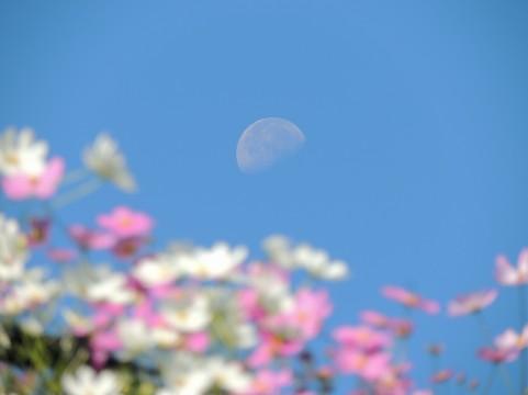 ピンクの花イメージ