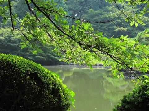 森と湖イメージ