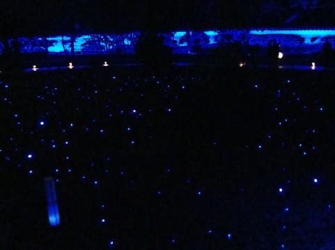 ライトアップ京都