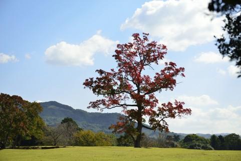 奈良公園イメージ