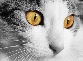 猫の目イメージ