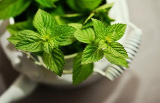 観葉植物イメージ