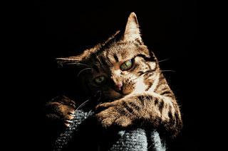 猫攻撃イメージ