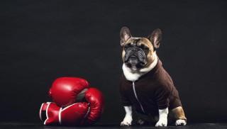 ブルドックボクシング