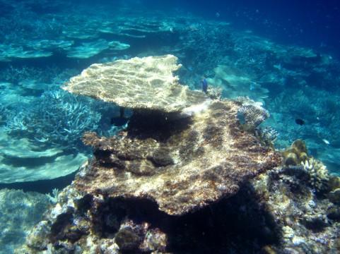 海底イメージ