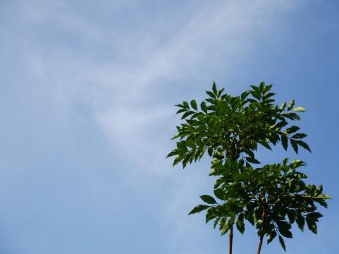 空と木イメージ
