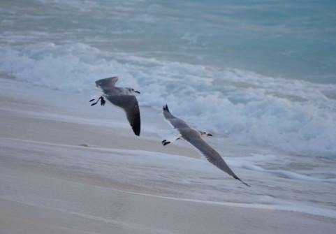 海辺と鳥イメージ