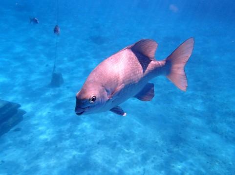 水中の魚イメージ