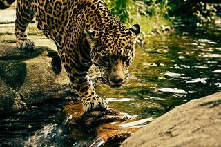 ジャングルイメージ