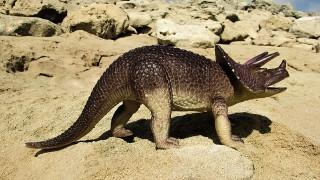 トリケラトプスイメージ